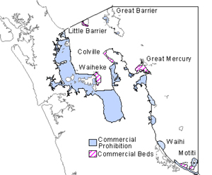 coromandel scallop management area