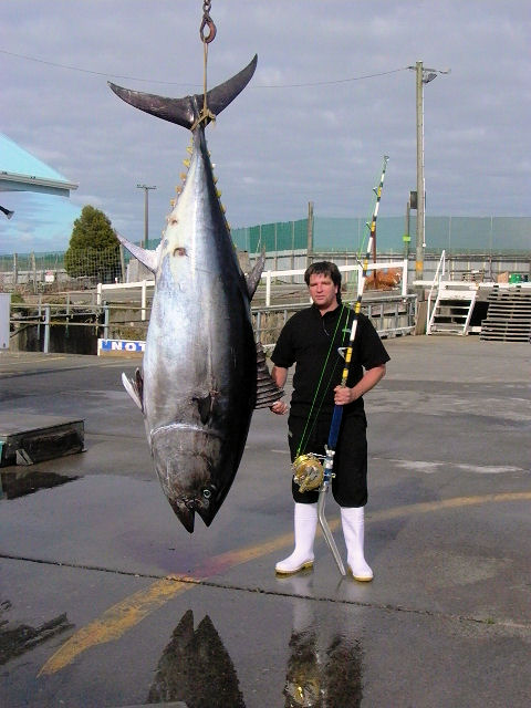 west coast bluefin tuna